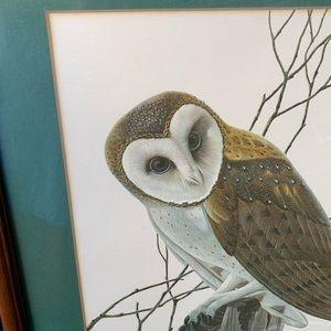 Barn Owl Framed Print John A Ruthven